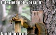 Bored squirrel, funny memes, #NetworkingDurham #905business.com