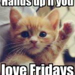 Friday Kitteh