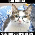 It's Caturday! Enjoy!