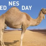 It's Humpday!