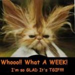 Friday Funnies!  – 905business.com