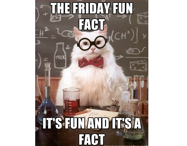 Friday Fun Fact Cat Picture 905 Business Com